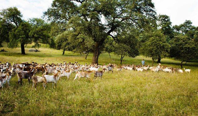 dehesa-sierra norte-queso cabra