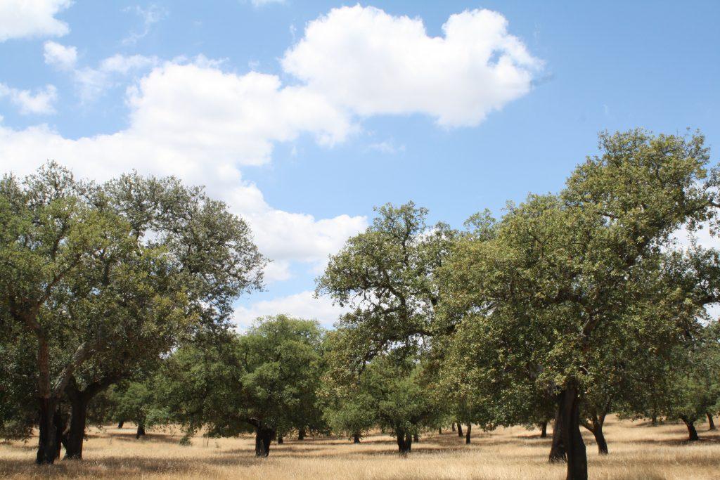 ayudas forestales andalucia 2019