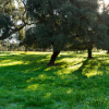 sierra-norte-sevilla-verde