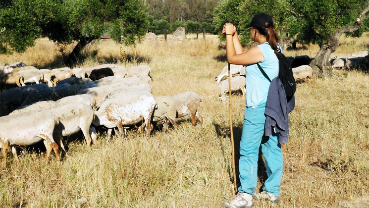 escuela pastores 2020
